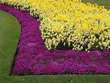 Colorful flower bed with invisible border, beautiful garden design and ...