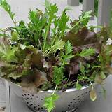 Welcome Spring with Easy Indoor Container Gardens   Southern Belle ...