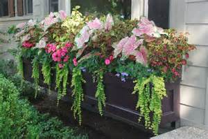 you a few other ways you can incorporate caladiums into your garden
