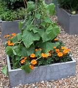 Container Gardening Archives - Page 109 of 144 - Home Inspirations