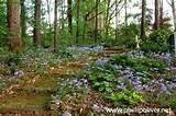 beautiful woodland garden | Garden Ideas & Tips | Pinterest