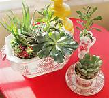 make a indoor container garden using succulents you ll be hooked