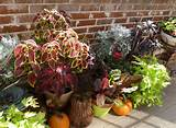 transform your container garden for fall fall outdoor decor ideas