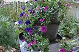 container gardening ideas | Outdoor Decorating & Gardening | Pinterest