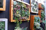 Ewa in the Garden: Low maintenance succulent vertical garden