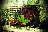 vertical! | Great Garden Ideas | Pinterest
