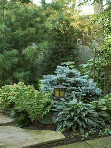 growth pattern landscaping ideas white pine landscapes ideas low