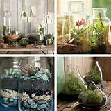 ... -ideas-that-keep-your-fresh-indoor-planters-indoor-plant-ideas.jpg