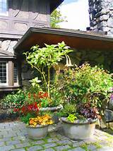 outdoor pot plants outdoor pot plants