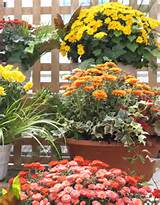Fall Decorating Ideas: For your Fall Planters, don't forget about ...