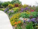 succulent gardens mediterranean landscape san diego by the