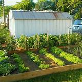 raised gardening raised garden ideas pinterest