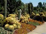 cactus garden ideas about homes decorating ideas