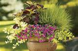 container garden ideas make a big impact with these container garden