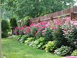 plants along fence rose garden design garden landscaping ideas ...