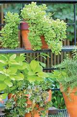 potted plants in a backyard garden | Outdoor Decor | Pinterest