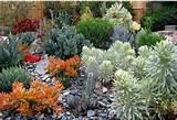 jardines con plantas suculentas plantas