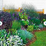 ... plan to make a butterfly garden in the back, something like this