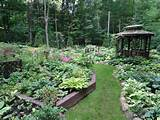 an-early-july-backyard-shade-garden-walk-in-green-bay-wi-gardening ...