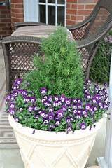 idea container gardens gardens inspiration california gardens idea