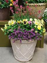 In this garden planter, a few simple pansies will brighten up your day ...