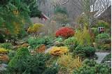 fall color garden ideas pinterest