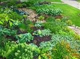 Front-Lawn-Vegetable-Garden-paddington-farms-temecula