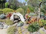 Cactus garden | Garden ideas | Pinterest
