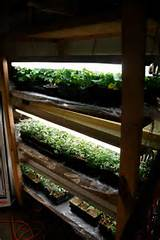 Related Post from Start Indoor Gardening Now For Your Home ...