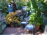 Tropical Garden Design - tropical - patio - other metro - by www.