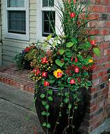 Stylish Shady Containers ~ many different types of container gardens ...