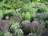 Display Gardens at Northwind Perennial Farm in Burlington, WI. Photo ...