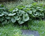 small midwest hosta garden design pictures remodel decor and ideas