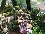 indoor cactus garden! | Gardens & Rocks | Pinterest
