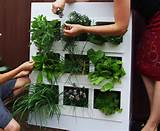 urban gardening ideas guzewski landscapes urban gardening ideas