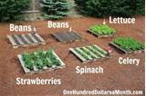 How To Start A No Fuss Vegetable Pallet Garden