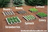 how to start a no fuss vegetable pallet garden