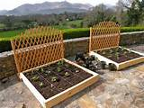 square foot garden with trellis gardening plants