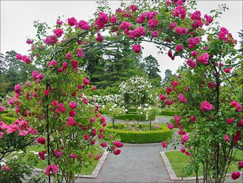 Rose Garden Ideas, Garden Ideas: Beatiful Rose Garden Ideas