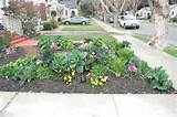landscaping idea | Edible Front Yard Garden | Pinterest