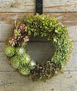 35 Indoor And Outdoor Succulent Garden Ideas » Photo 31
