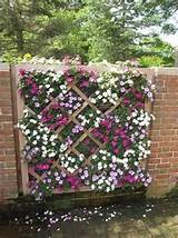 lattice garden wall perfect for out privacy wall between the tenants
