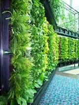 Share] Green Wall, Hijaukan Dindingmu... - Kaskus - The Largest ...