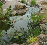 ... -to-guide-rain-water-ideas-start-a-back-yard-garden-project-diy (3