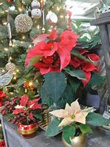 master gardener holiday host gift ideas