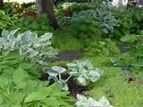 Front yard shade gardening. | Garden | Pinterest