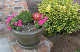 Patio Container Garden Ideas | CDxND.com - Home Design in Pictures