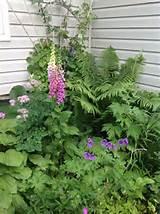 shady corner shade garden pinterest