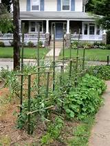 trellis trellising can make trellises auction and offers advice from