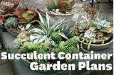 succulent container garden plans growing succulents succulents and